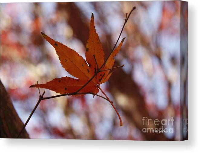 Leafe Canvas Print featuring the photograph Autumn Swing by Yumi Johnson