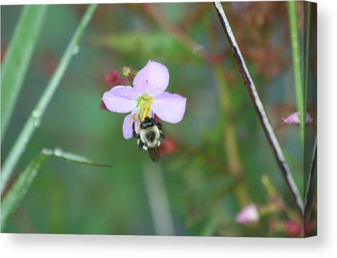 Bee Canvas Print featuring the photograph Beelish by Cyndi Brewer