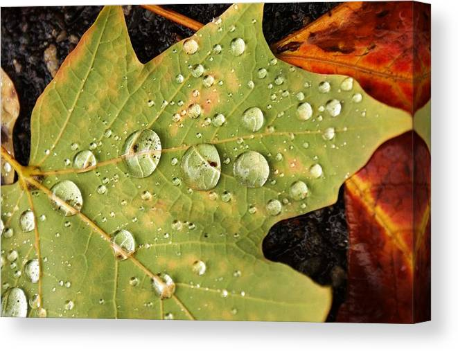 Leaf Canvas Print featuring the photograph Bejeweled Leaves by Matthew Green