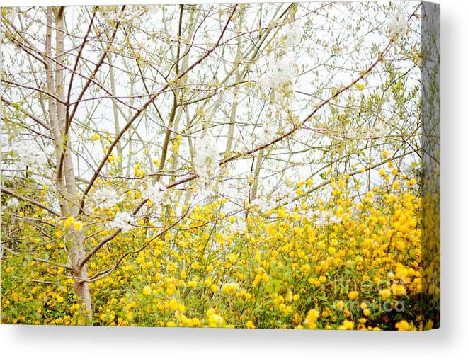 Nature Canvas Print featuring the photograph Bright by Violet Gray