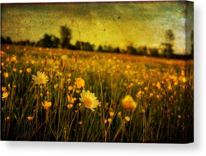 Bloom Canvas Print featuring the photograph Buttercup Meadow by Tim Kahane