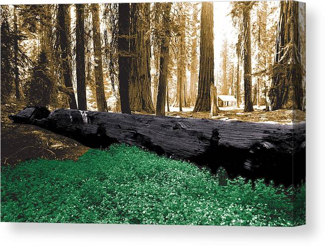 Yosemite Canvas Print featuring the photograph Cabin In The Woods by Mike Flynn