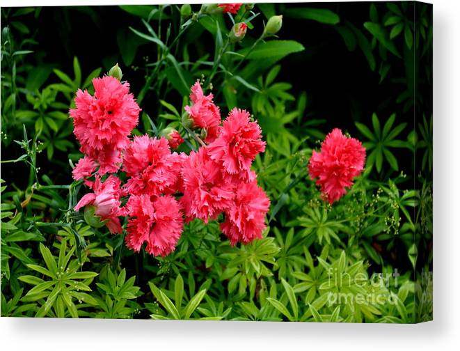 Carnations Canvas Print featuring the photograph Carnations by Tanya Searcy