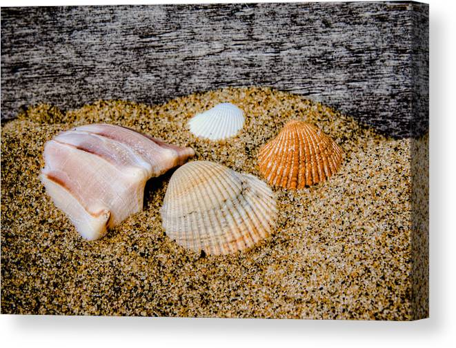 Beach Canvas Print featuring the photograph Collection Of Shells by David Hahn