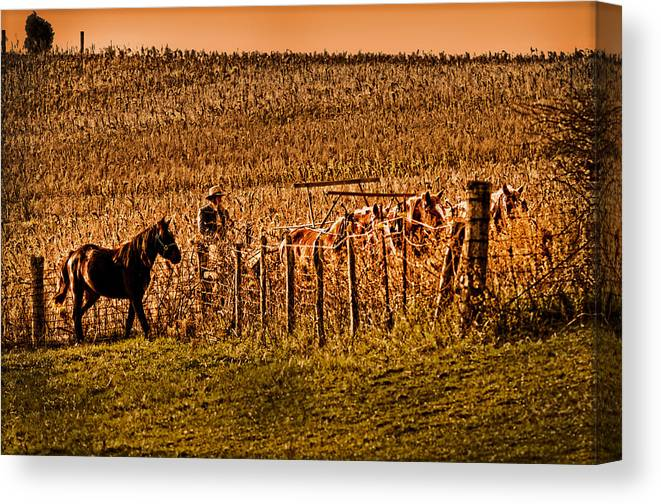 Colt Canvas Print featuring the photograph Colt Watching The Team Work by Randall Branham