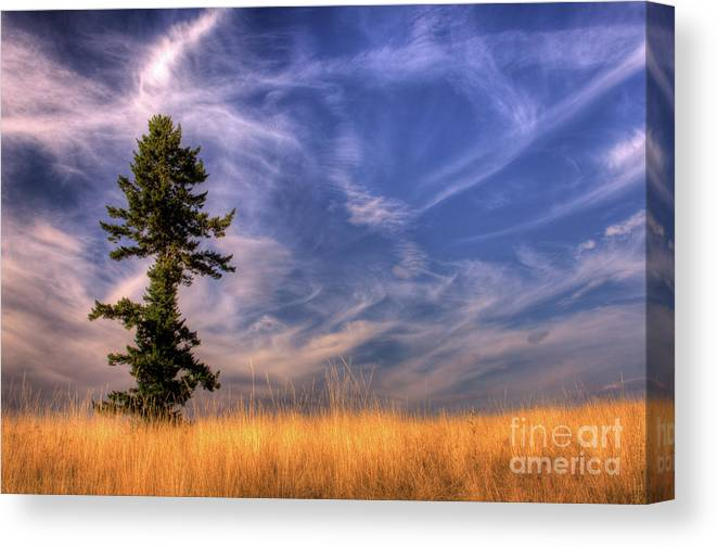 Tree Canvas Print featuring the photograph Come Dance With Me by Katie LaSalle-Lowery
