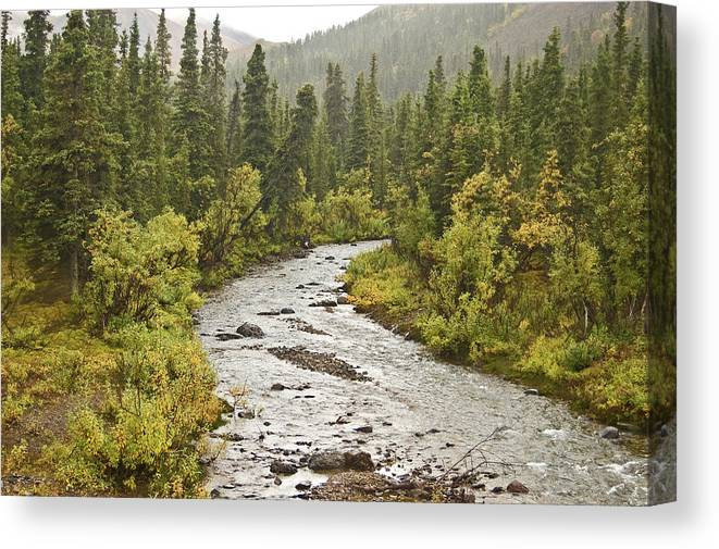 Landscape Canvas Print featuring the photograph Crossing The Stream In Denali by Jim and Kim Shivers