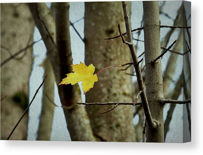 Autumn Canvas Print featuring the photograph Don't Let Me Fall by Rebecca Cozart