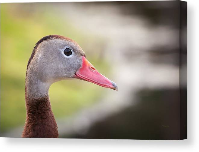 0116 Canvas Print featuring the photograph Duck Portrait by Marx Broszio