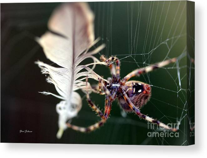 Spiders Canvas Print featuring the photograph Feather And Spider by Yumi Johnson