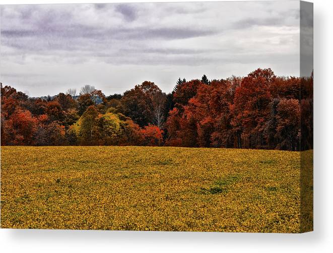 Fields Of Gold Canvas Print featuring the photograph Fields Of Gold by Bill Cannon