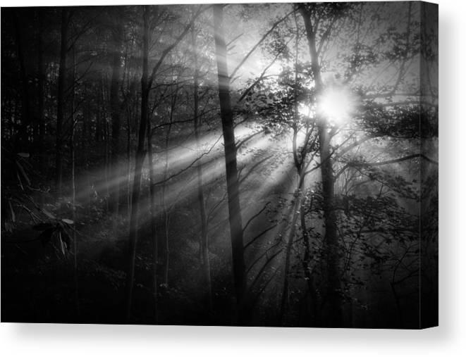 Fog Canvas Print featuring the photograph Foggy Forest by Matt Trimble