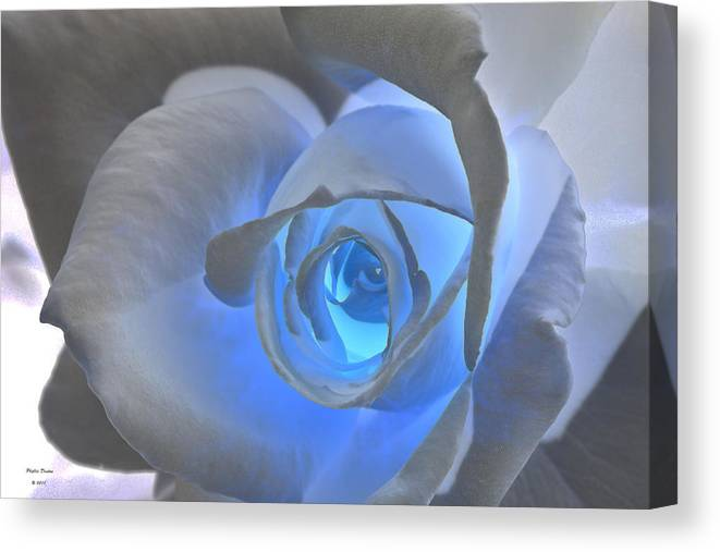 Rose Canvas Print featuring the photograph Glowing Blue Rose by Phyllis Denton