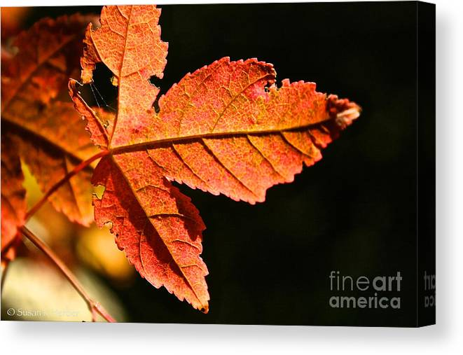 Outdoors Canvas Print featuring the photograph Glowing Gold by Susan Herber