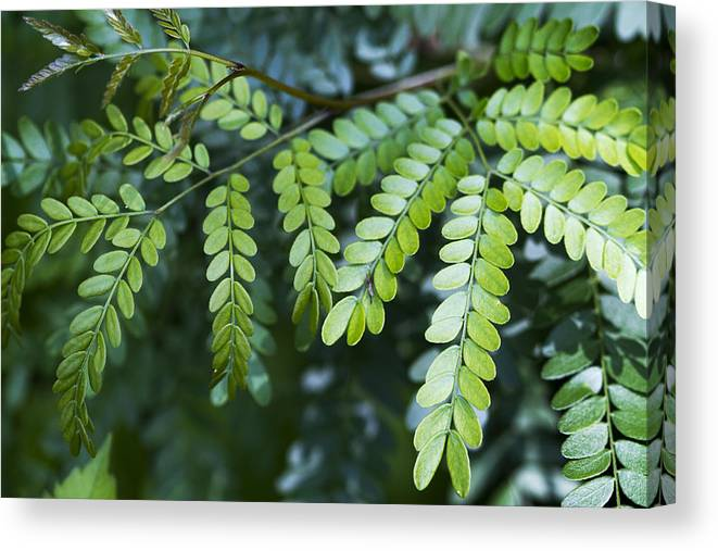 Green Canvas Print featuring the photograph Green by Kathy Clark