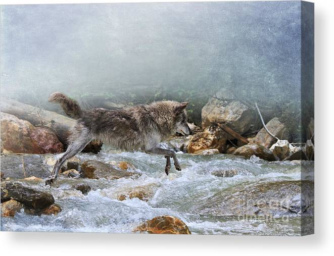 Wolf Canvas Print featuring the photograph Grey Wolf Jumping Over A Mountain Stream by Louise Heusinkveld
