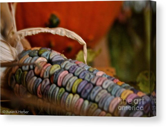 Outdoors Canvas Print featuring the photograph Jewel Tone Kernels by Susan Herber