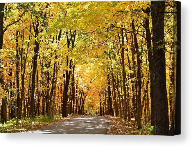 Fall Canvas Print featuring the photograph Leaf Lit Path by Kim Hymes