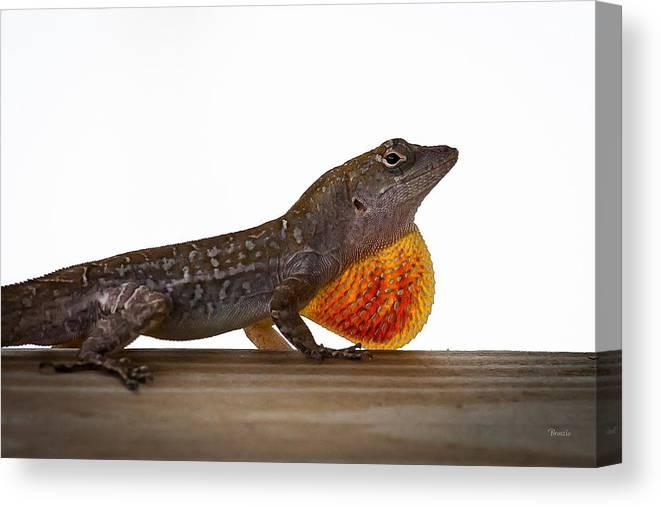 3903 Canvas Print featuring the photograph Lizard Portrait by Marx Broszio