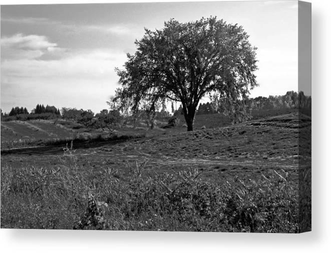 Usa Canvas Print featuring the photograph Lone Tree by LeeAnn McLaneGoetz McLaneGoetzStudioLLCcom