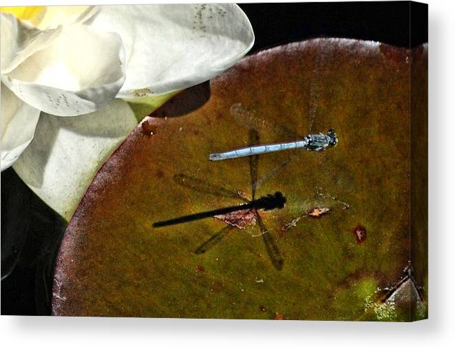 Damselfly Canvas Print featuring the photograph Me And My Shadow by Don Mann