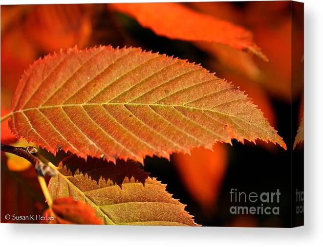 Outdoors Canvas Print featuring the photograph Molten Bronze by Susan Herber