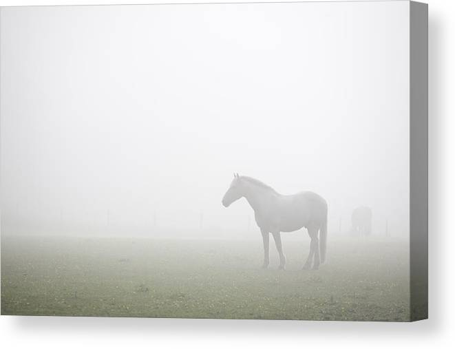 Horse Canvas Print featuring the photograph Morning Mist by Anthony Limberg