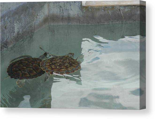 Sea Turtles Canvas Print featuring the photograph Move Out Of My Way by Stacey Robinson
