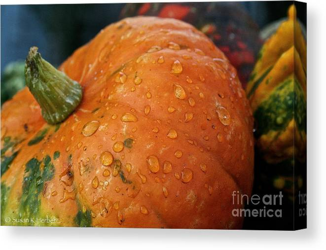 Outdoors Canvas Print featuring the photograph October Rain Drops by Susan Herber