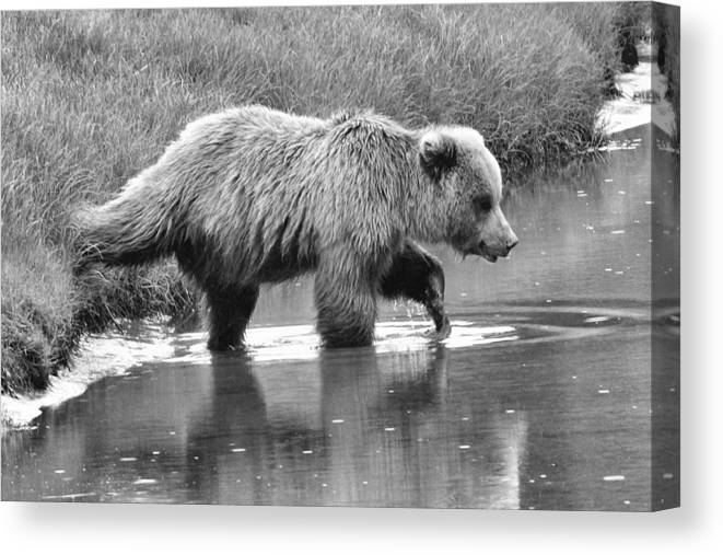 Wildlife Canvas Print featuring the photograph Oh So Wet by Dennis Blum