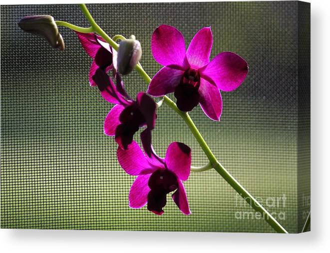Purple Orchids Canvas Print featuring the photograph Orchids In The Sunlight by Theresa Willingham