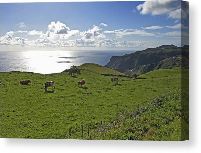 Photography Canvas Print featuring the photograph Pastoral Landscape Of Santa Maria Island by Axiom Photographic