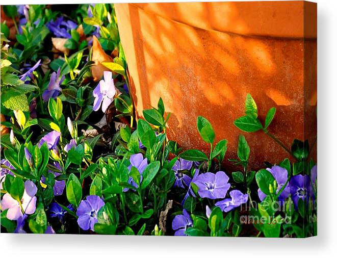 Flowers Canvas Print featuring the photograph Periwinkles by Nava Thompson