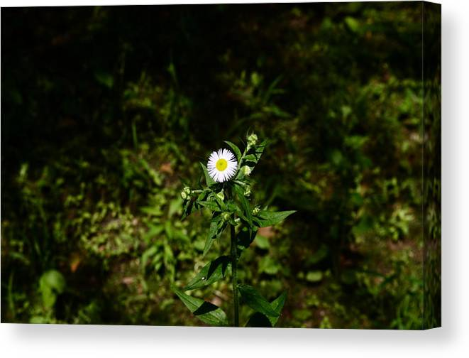 Canvas Print featuring the photograph Portrait Of A Flower by Oana Blanaru