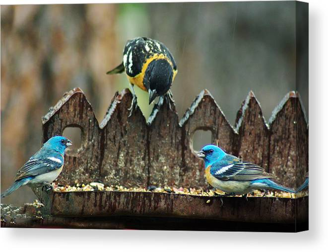 Birds Canvas Print featuring the photograph Room For More by Jenny May