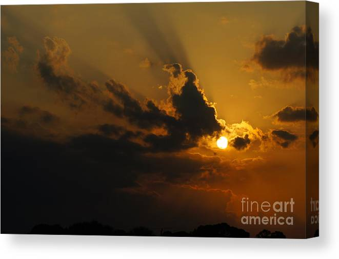 Sunset Canvas Print featuring the photograph Savanna Sunset by Lynda Dawson-Youngclaus