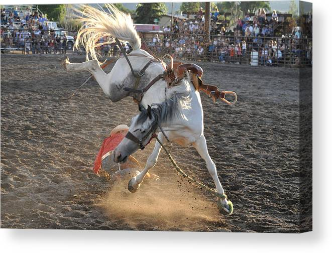 Rodeo Canvas Print featuring the photograph Seriously Buck Off by Jeff Krogstad