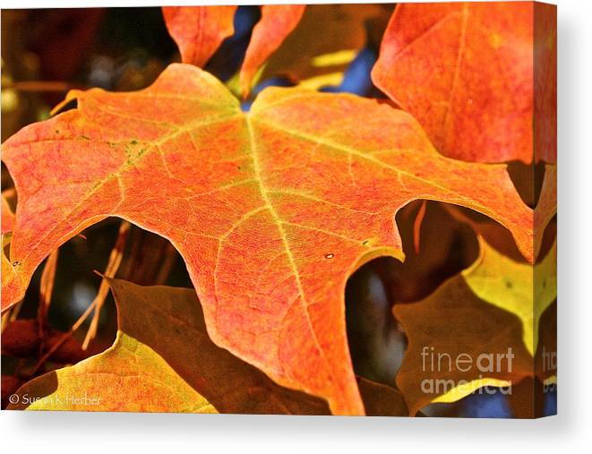 Outdoors Canvas Print featuring the photograph Sm Leaf by Susan Herber