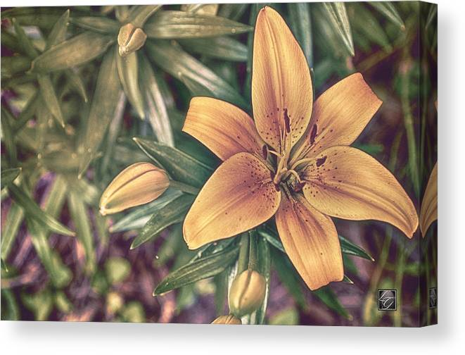 Hdr Canvas Print featuring the photograph Spring In Bloom by LG Photography Designs