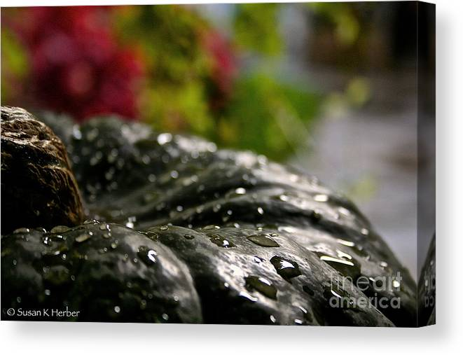 Outdoors Canvas Print featuring the photograph Squash Showered by Susan Herber