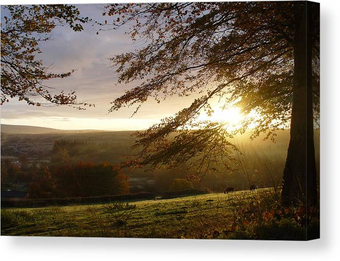 Leaves Countryside Dartmoor Uk Forest Wood Trees Golden Green Autumn Canvas Print featuring the photograph Sun Almost Up by Lloyd Burchell