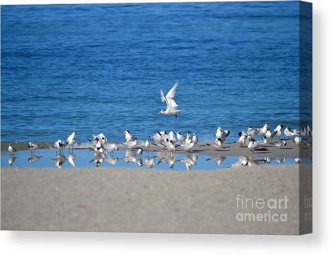 Seagulls Canvas Print featuring the photograph The Flock by Brenda Alcorn