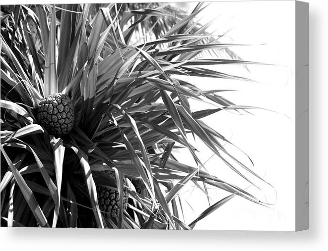 Fruit Canvas Print featuring the photograph The Tourist Pineapple Black And White by Angela DiPietro