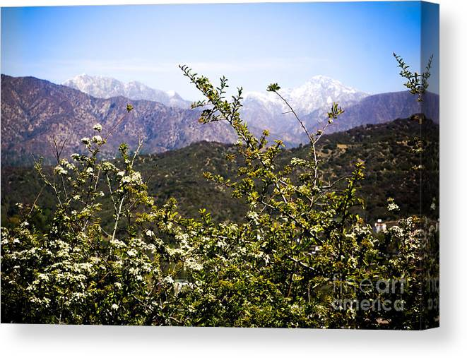 White Canvas Print featuring the photograph The View by Amanda Laskin