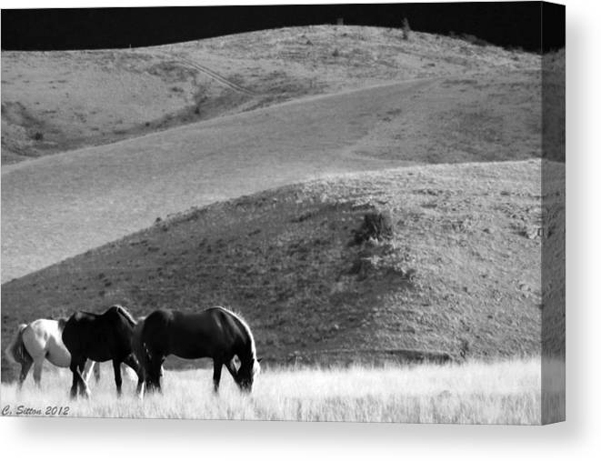 Animal Photographs Canvas Print featuring the photograph Tres Caballos by C Sitton