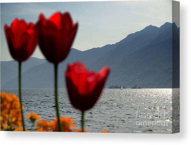 Islands Canvas Print featuring the photograph Tulip And Lake by Mats Silvan