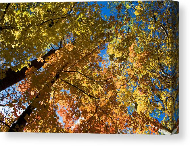 Autumn Canvas Print featuring the photograph Underside Of Fall by Eric Gordon
