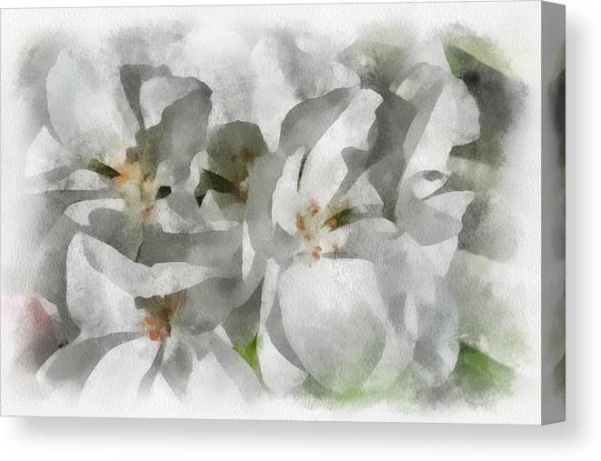 Santa Canvas Print featuring the digital art White Geraniums - Watercolor by Charles Muhle