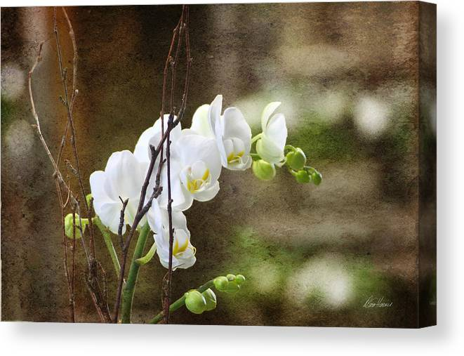 White Canvas Print featuring the photograph White Orchid by Diana Haronis