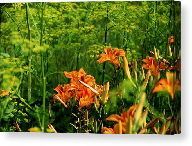 Wild Lilies Canvas Print featuring the photograph Wild Tiger Lilies 2 by Roger Soule